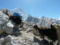 Everest és Gokyo Ri Trek